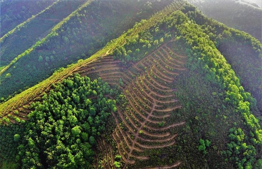 Resim Bal Ormanları Hedefine Ulaşıyor